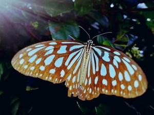 奄美大島のジャングルで見た蝶