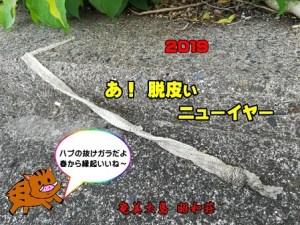 奄美のゲストハウス昭和荘の年賀状