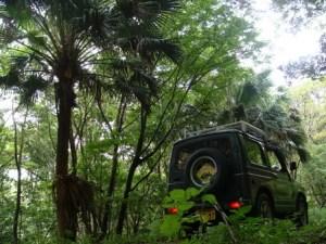 昭和荘ツアー車と奄美ジャングル