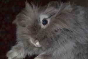 можно ли давать кроликам красную свеклу и сырую картошку