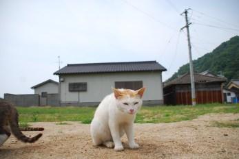sanagijima_0297
