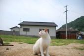 sanagijima_0299