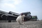sanagijima_0623