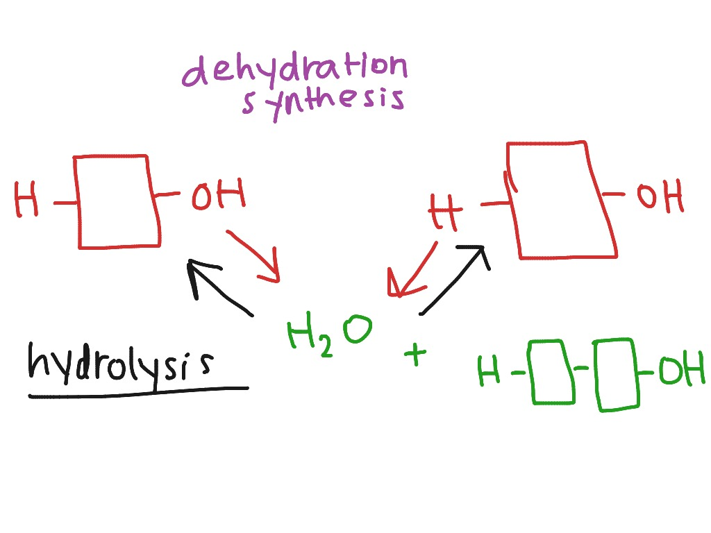 Biology Chapter 5 Dehydration Synthesis