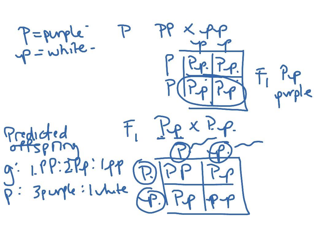 Basic Punnett Square Review