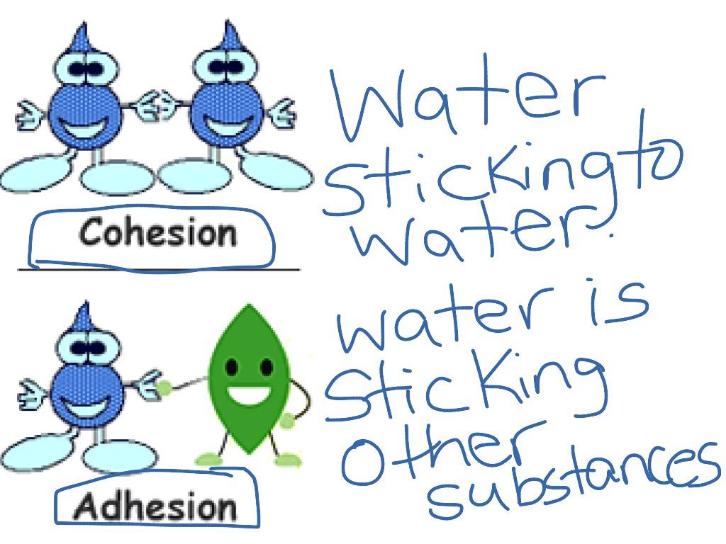 Adhesion Worksheet