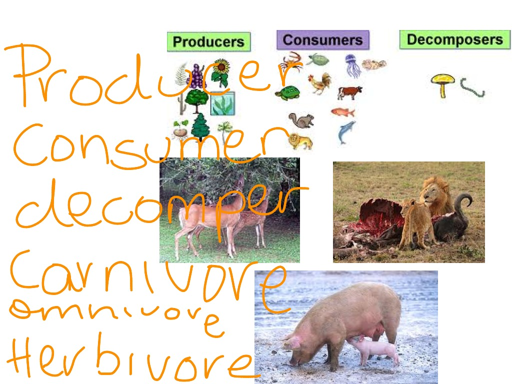 Which Animals Are Carnivores Herbivores Omnivores