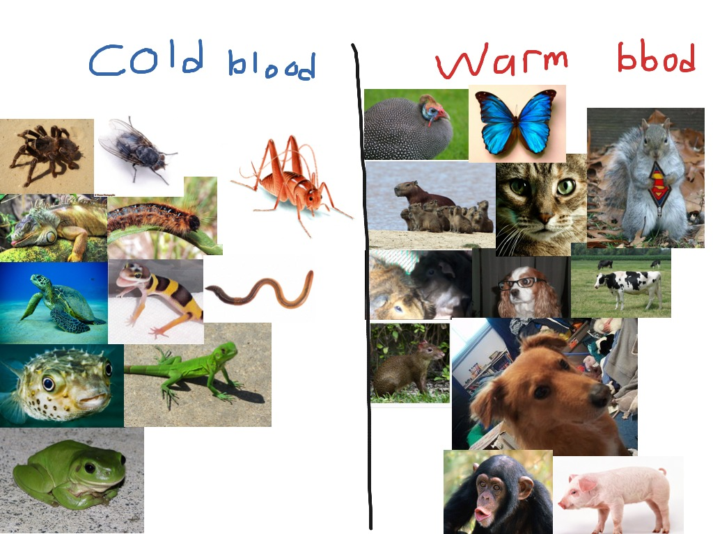 Warm And Cold Blooded Animals And Insects