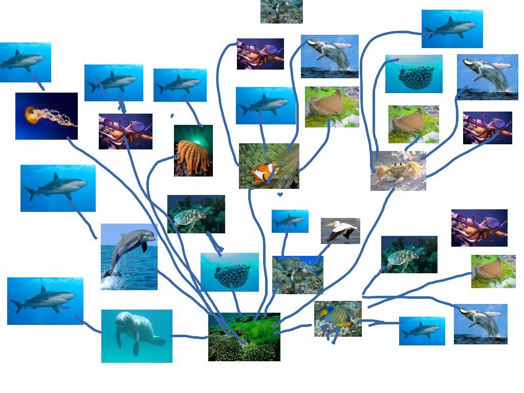 Marine Life Food Web Jordan Magyar