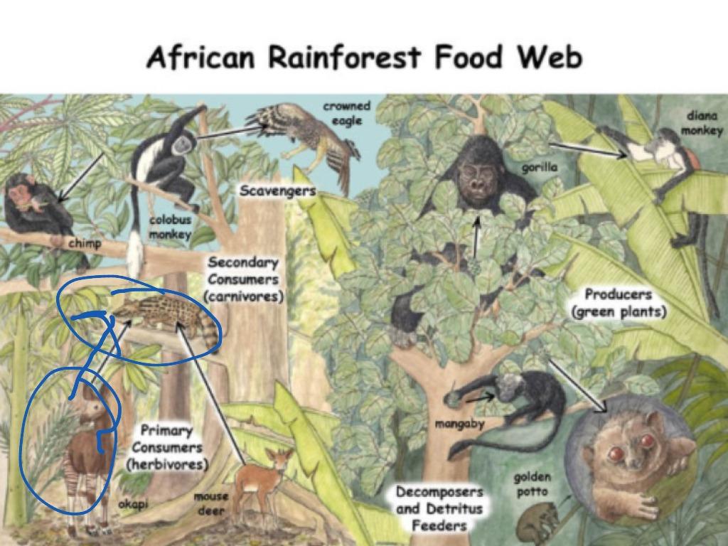 Savanna Food Web