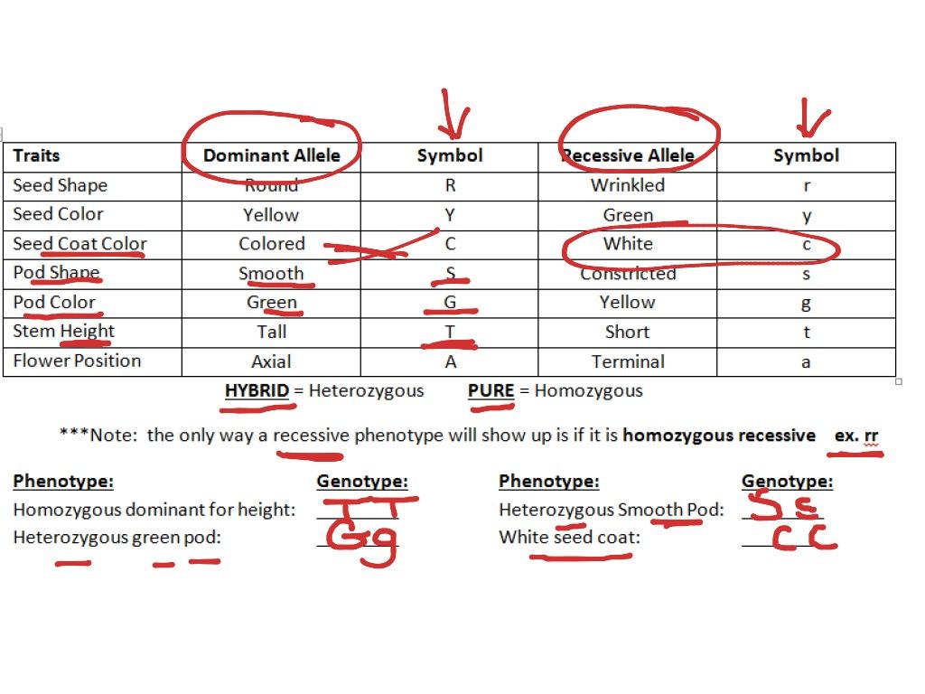 Genetics Worksheet