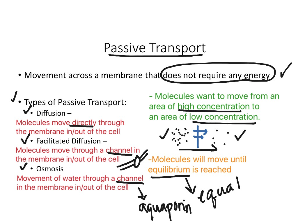 Active And Passive Transport 1 Venn Diagram