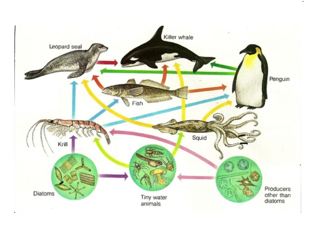 Pictures Of A Ocean Food Chain
