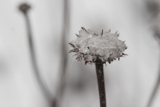 After the sleet and snow - in west central Missouri.