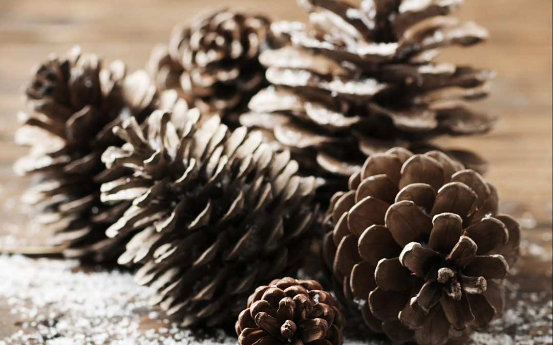 Decorate with Pinecones from Fall to Winter