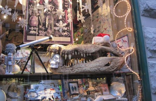 Maxilla & Mandible fossils