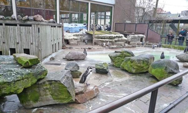 Planckendael Zoo Penguins