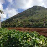 Farm to Table: Otsuji Farms