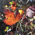 Day Trip from Washington DC: Fall Foliage in Shenandoah Valley