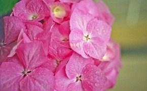 Pink 2.