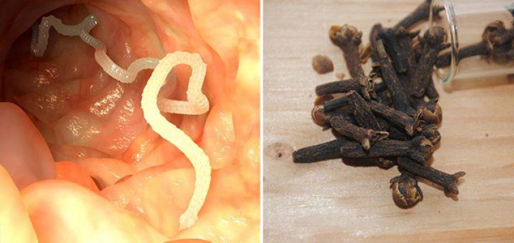 Paraziták kezelése hv vel