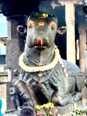 Story of NANDI, The Vehicle of Lord Shiva