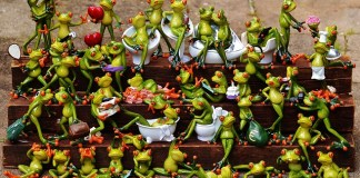 A photo shoot of frogs.