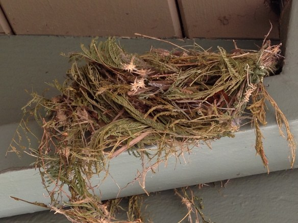 Picture of nest