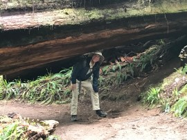 Redwood NP, Boy Scout Trail, Jonathan