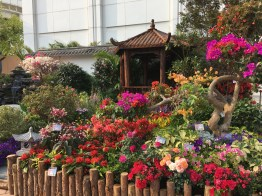 The garden plot in Kowloon Park is one of the most popular spots. (Photos: Emily Luk)