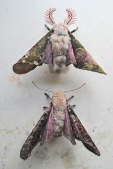 Growing-moths1