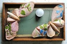 Moths-in-tray-nn