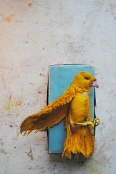 yellow-bird-small