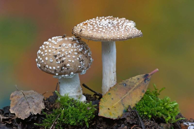 crop, ThinkMyco, sustainability, agriculture, global warming, fungi, protein