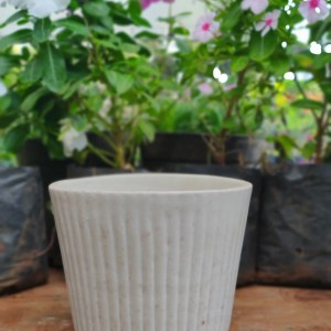 Cylindrical Wide Rim Mini Planter