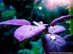 rain drops....