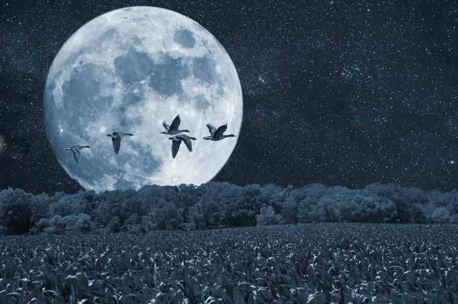 Natural rhythms of the Moon and advisable Farming activities