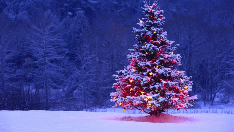beautiful-christmas-trees-xidzzwkd