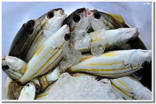 frozenfish