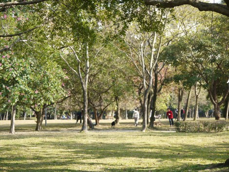 People play with their dogs in Daan Forest Park. Photo by ChinLin Pan.