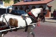 A beautiful horse pulling a carriage around the event. / Photo by Parker Conley