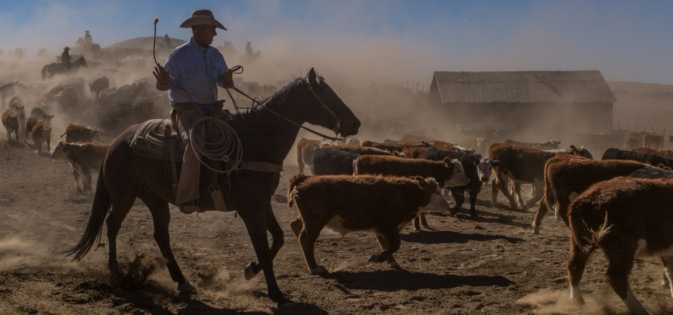 Cowboys A Documentary Portrait