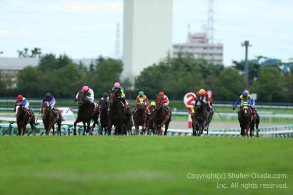 16神戸新聞杯1