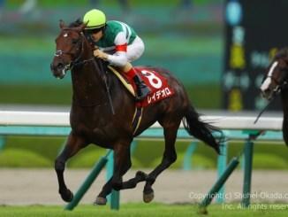 17神戸新聞杯3