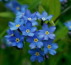 wild flower 3-3