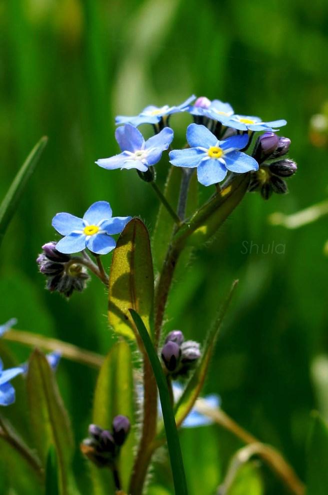 wild flower-4