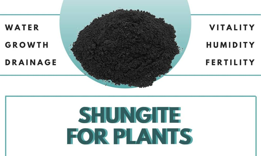 home-plants-fertilizer-how-to-use-shungite