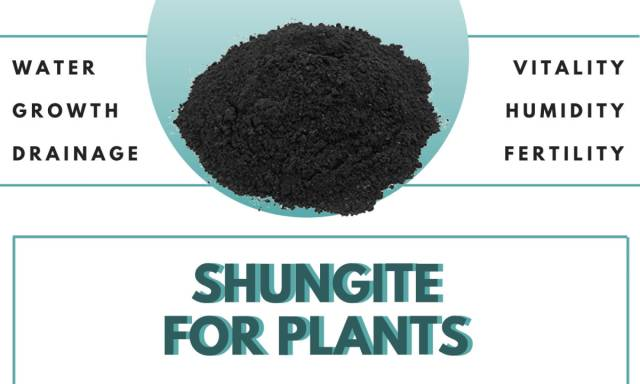 Enrich the Life of Your Home Plants with the Power of Shungite