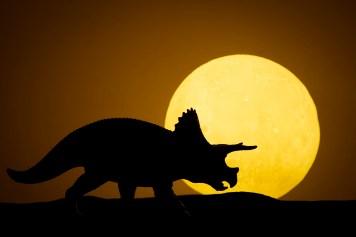 Dino-09005