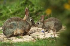 bunny-1329
